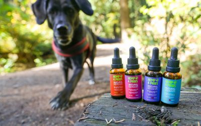 Relieve your pet's nausea and digestive issues