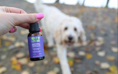 Natural treatment for pet seizures