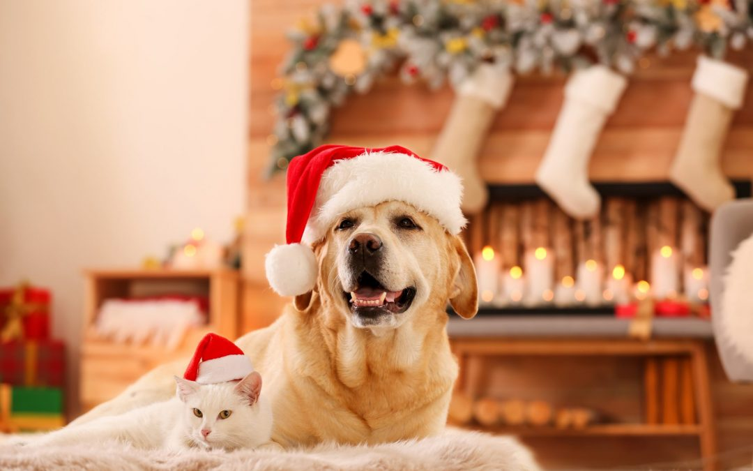Help your pet stay anxiety-free this holiday season