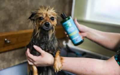 Soothing topicals for your dog's grooming routine