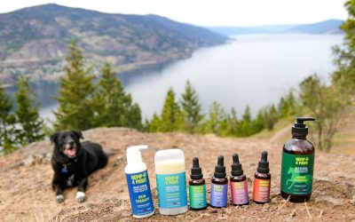 How can Hemp 4 Paws products help my pet?