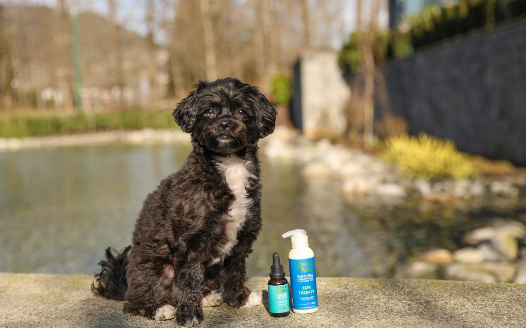 Eczema in Pets: Causes, Symptoms, and Relieving with Hemp 4 Paws